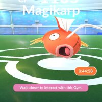 GO Snapshot surprise, event-exclusive Field Research tasks and August Community Day Box announced for Magikarp Pokémon GO Community Day