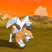 Dusk Form Lycanroc learns Accelerock & Counter and has the Tough Claws ability in Pokémon Ultra Sun & Ultra Moon