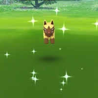 New Shiny Pokémon Shiny Poochyena can now be found and caught in Pokémon GO
