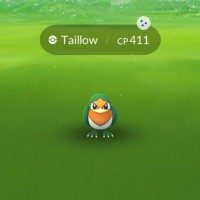 Shiny Taillow, Shiny Swellow, Shiny Zigzagoon and Shiny Linoone can now be found and caught in Pokémon GO for the first time