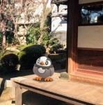 pokemon_go_go_snapshot_feature_taking_picture_of_starly